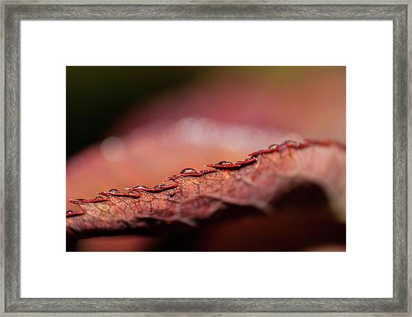D3576 Framed Print