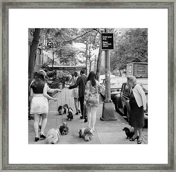 Dachshund Watching Little Shih Tzus Go B Framed Print by Yale Joel