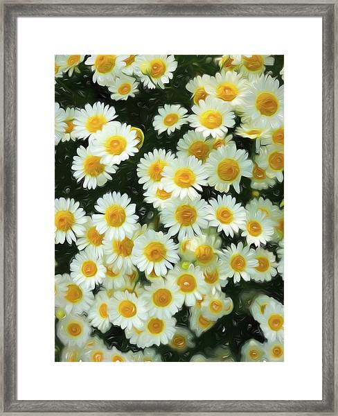 Daisy Crazy For You Framed Print