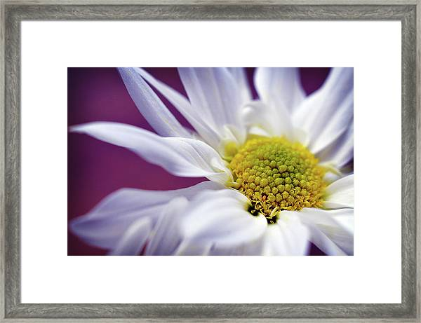 Daisy Mine Framed Print