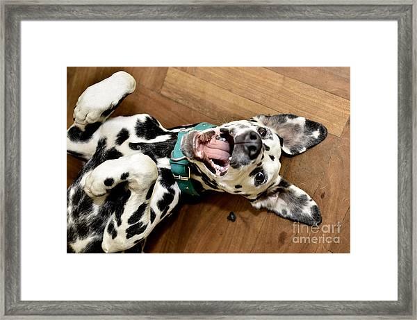 Dalmatian Dog Smiling Framed Print