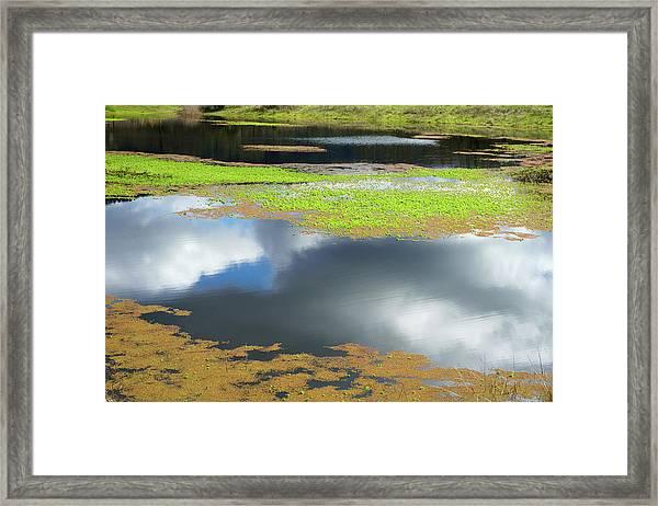 Damselfly Pond - 19 4497 Framed Print