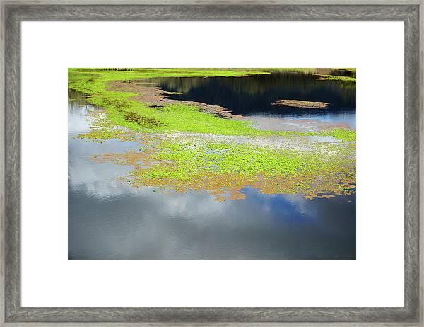 Damselfly Pond - 19 4503 Framed Print