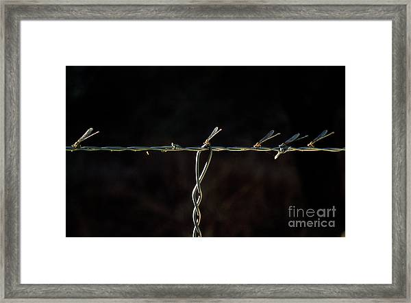 Damsels In Distress  Framed Print
