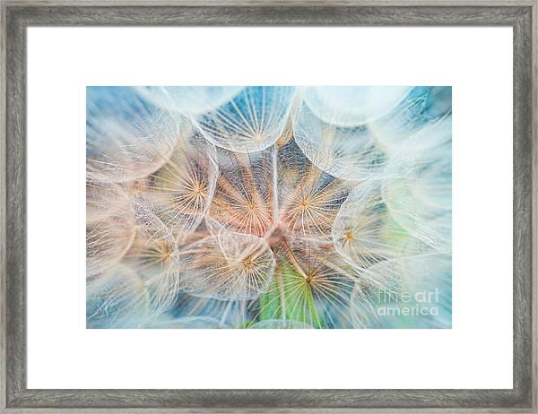 Dandelion Inside,macro Photography Framed Print
