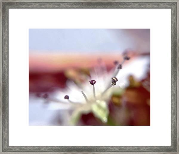Day 0-1 Sunrise Framed Print