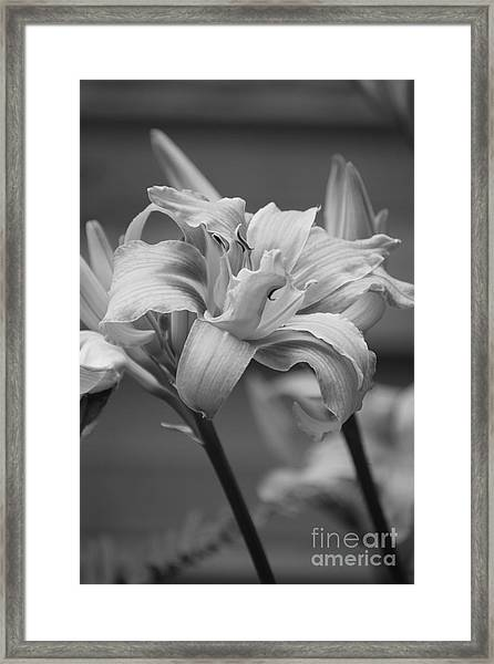 Framed Print featuring the photograph Day Lily Yellow Filter by Jeni Gray
