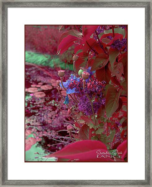 Day Of Red Framed Print