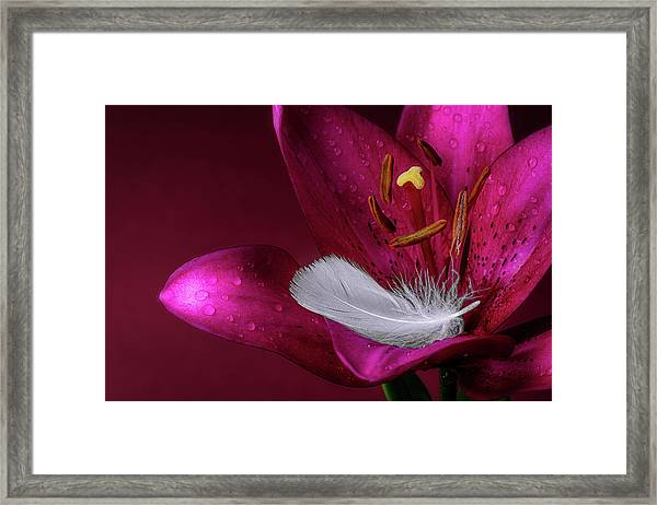 Daylily With Feather Framed Print