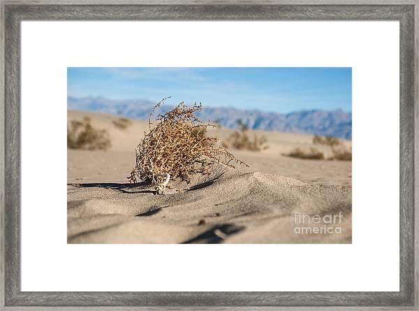 Dead Sagebrush Lies On Sand In Desert Framed Print