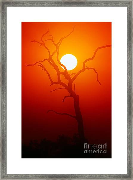 Dead Tree Silhouette With Dusty Sunset Framed Print by Johan Swanepoel