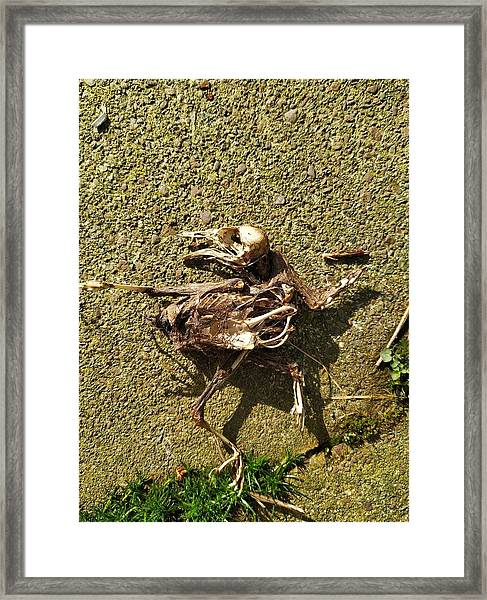 Death Shows Us We Are Nothing But Bones Framed Print