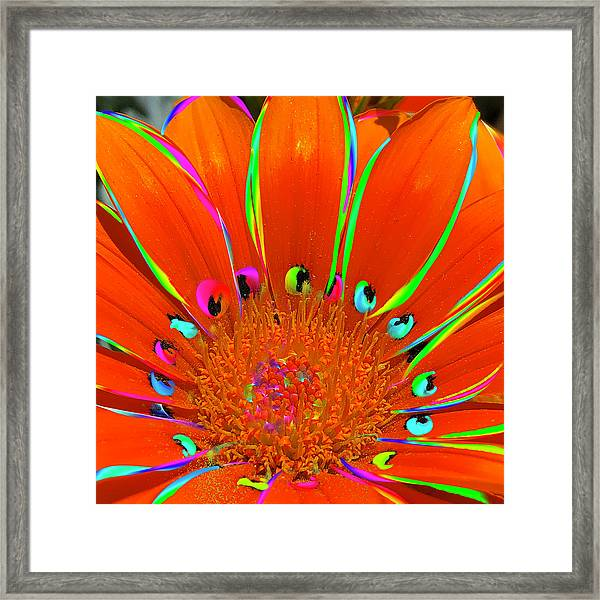 Deep Coral Bloom  Framed Print