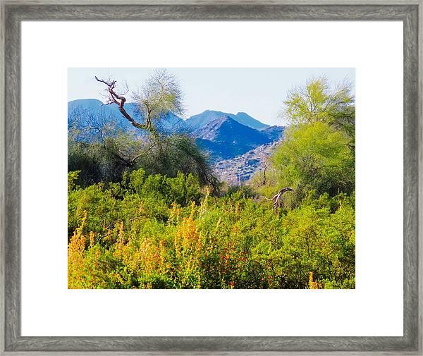 Deep Desert Valley In A Sonoran Desert Spring Framed Print