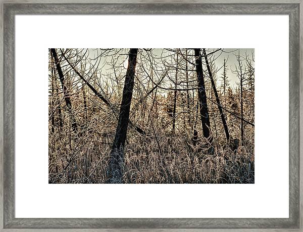 Deep Frost Framed Print