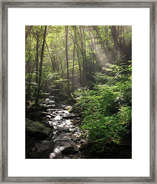Deep In The Forrest - Sun Rays Framed Print
