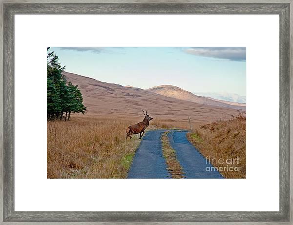 Deer Crossing Road On Jura Framed Print