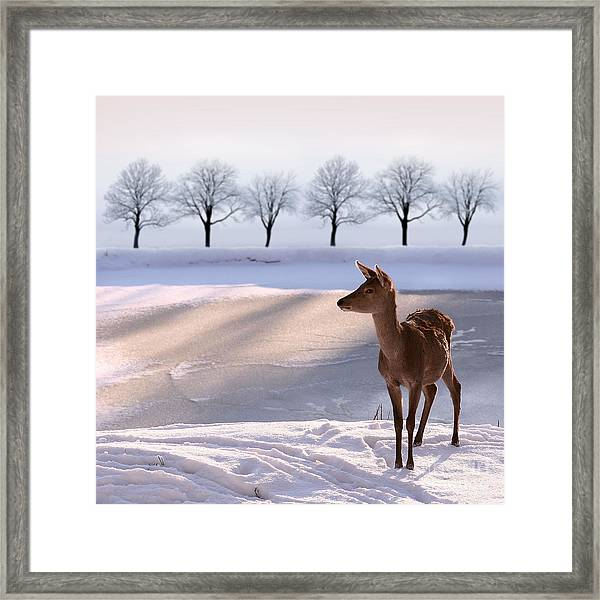Deer Doe And  Snowy Landscape Framed Print