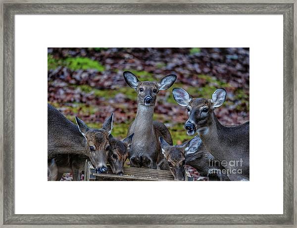 Deer Gathering Framed Print