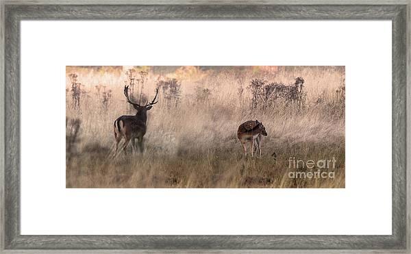 Deer In The Grasses Framed Print