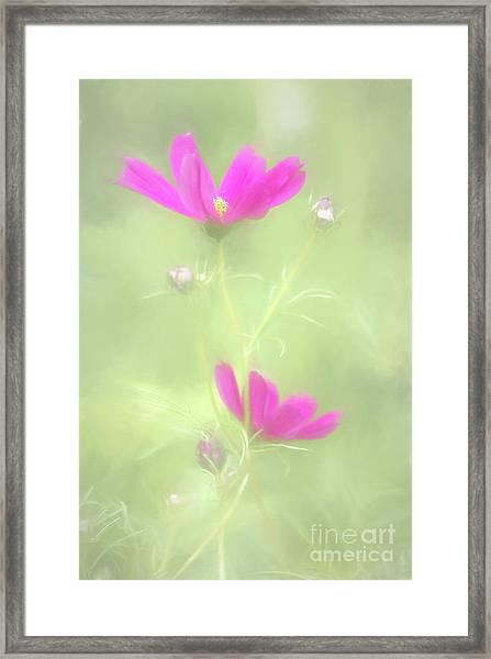 Delicate Painted Cosmos Framed Print