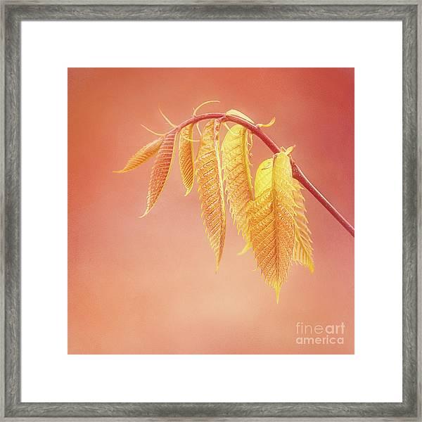 Delightful Baby Chestnut Leaves Framed Print