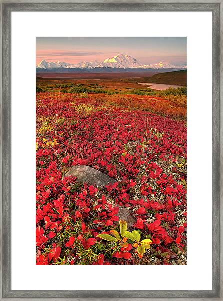 Denali National Park Fall Colors Framed Print