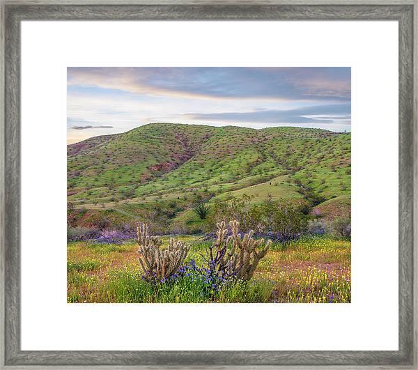 Desert Bluebell Phacelia Campanularia Framed Print