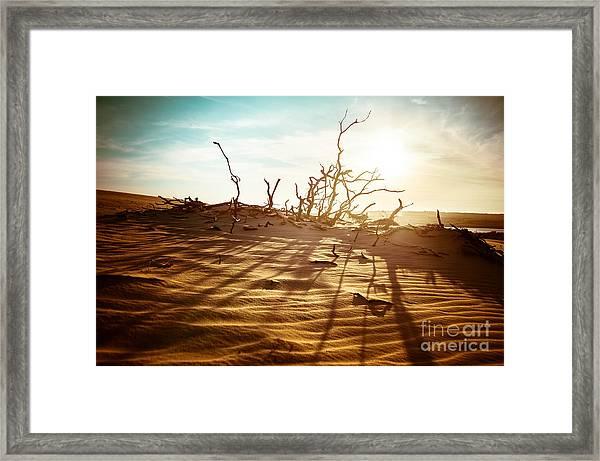 Desert Landscape With Dead Plants In Framed Print