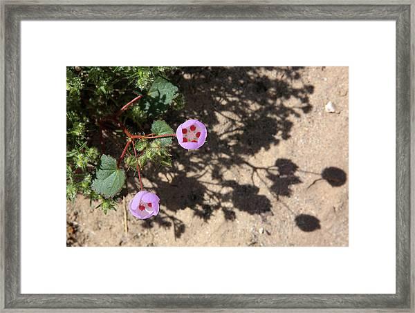 Desert Lanterns Framed Print by Robin Street-Morris