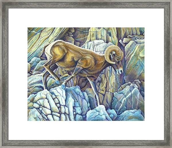 Desert Ram Framed Print