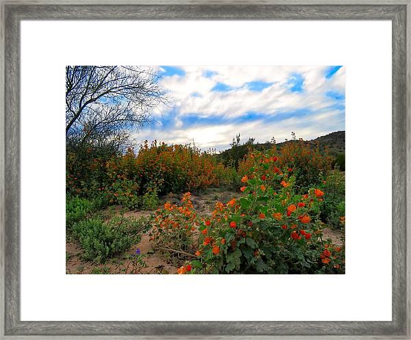 Desert Wildflowers In The Valley Framed Print