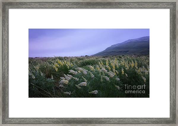 Desert Winds Framed Print