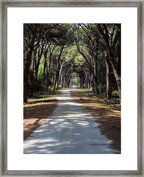 Dirt Pathway In A Mediterranean Pine Forest Framed Print