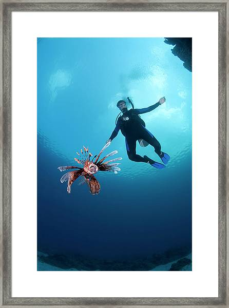 Diver With Lionfish At Ikes Reef Dive Framed Print