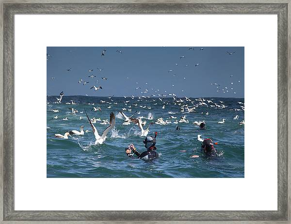 Divers And Photographers Watching Cape Framed Print