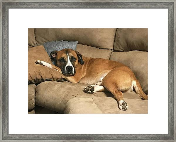 Dog Life Framed Print
