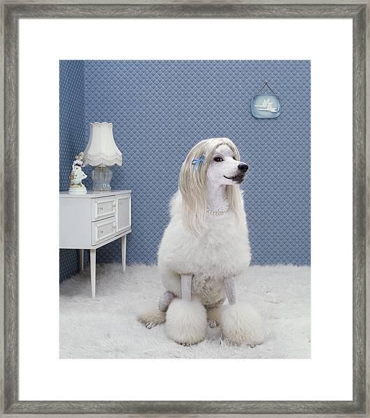 Dog Sitting On Rug, Looking Away Framed Print