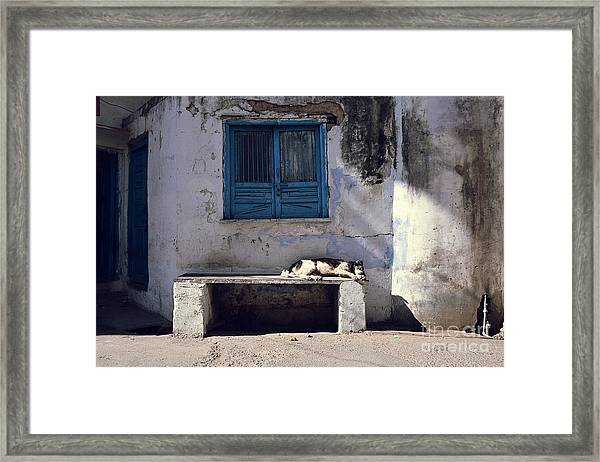 Dog Sleeps On A Bench Outdoor In Framed Print