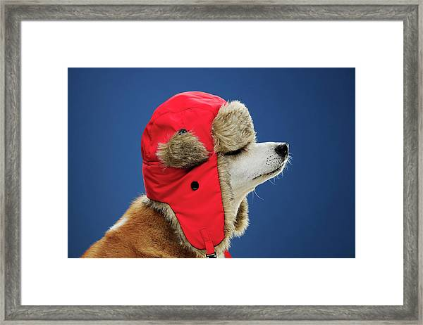 Dog Wearing His Winter Hat Framed Print