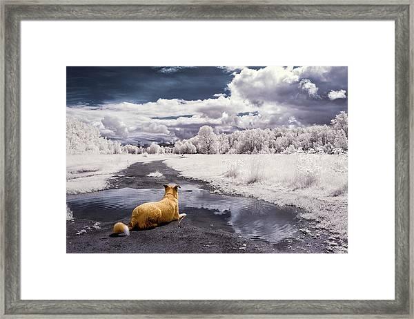 Doggy Daydream Framed Print