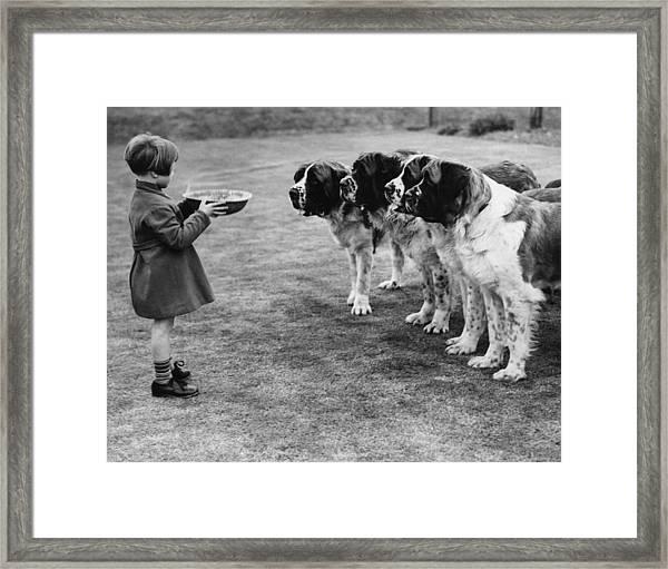 Dogs Dinner Framed Print