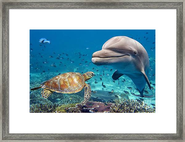 Dolphin And Turtle Underwater On Reef Framed Print