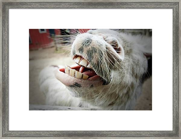 Donkey Face Framed Print