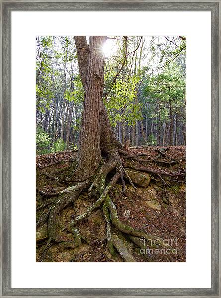 Down In Her Roots Framed Print