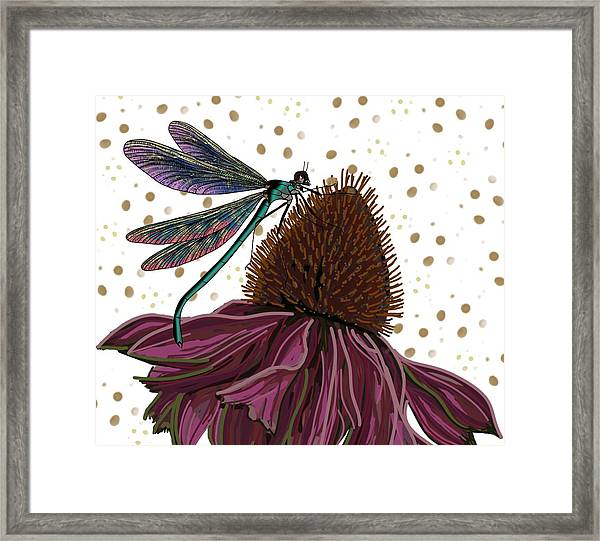 Dragon Fly And Echinacea Flower Framed Print