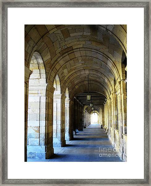 Drawn To The Light Framed Print