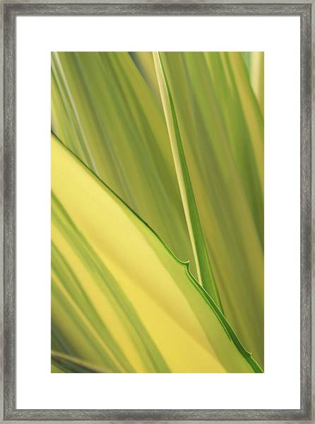 Dreamy Leaves Framed Print