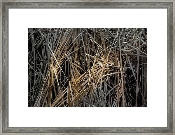 Dried Wild Grass IIi Framed Print