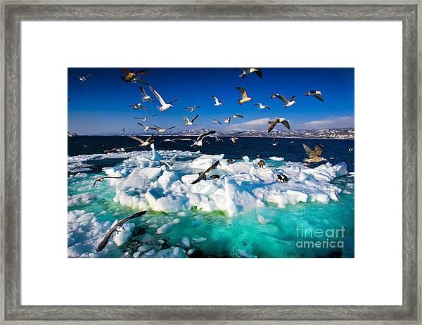 Drift Ice Framed Print